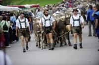 Hirten auf dem Weg zum Scheidplatz