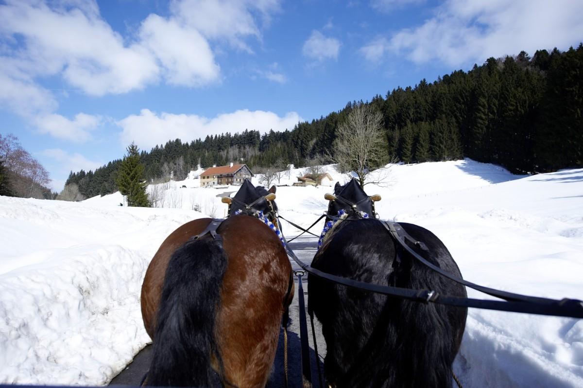 Pferde vor Schlitten