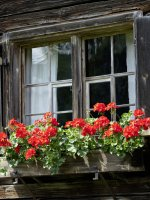 Fenster am Heimatmuseum