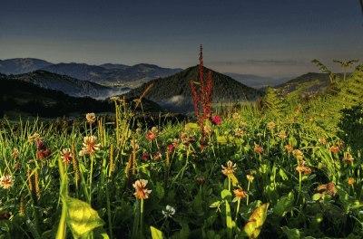 Ein Urlaub im Allgäu öffnet die Augen für die vielfältige Pflanzenwelt.