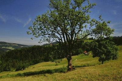 Baum in Berglandschaft