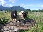Gemeinsam ausgedehnte Spaziergänge unternehmen
