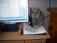 Computer Katze