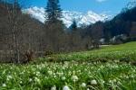 Frühlingserwachen im Stillachtal
