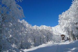Hakuba verschneiter Wald