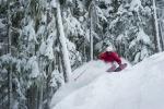 Whistler Powder Skiing