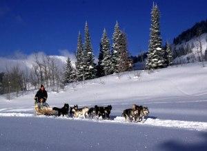 Hundeschlittenteam Jackson Hole