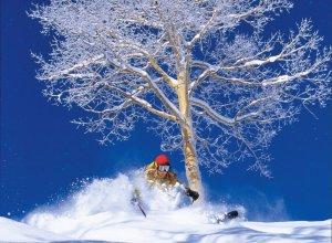 Freeride Aspen