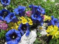 Blumengruß aus den Bergen