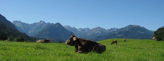 Glückliche Kühe in Reichenbach
