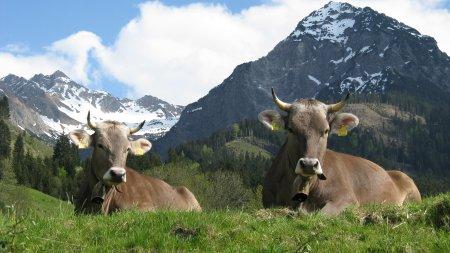 Frieda und Fanny auf der Weide