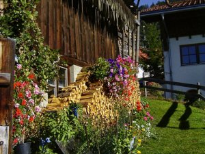 Blumenpracht am Haus