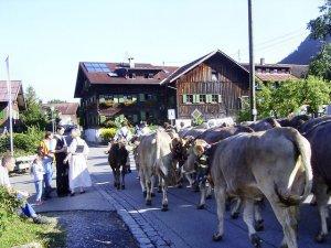 1 x im Jahr: Viehscheid