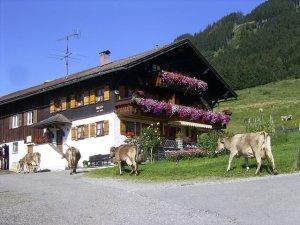 Die Herde kommt nach Hause
