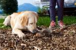 Mit Hund im Allgäu
