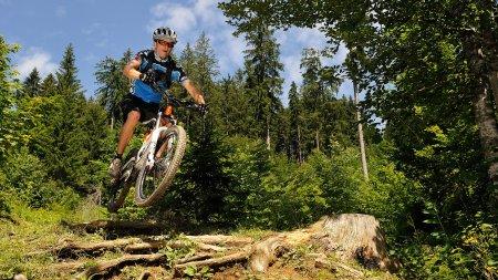 Trail durch die Wälder