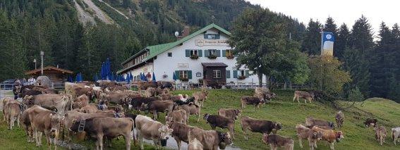 Berggasthof Seealpe mit Kühe
