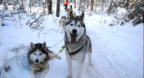 Husky-winterworkshop-in-riezlern-mit-schneeschuhwandern-24203