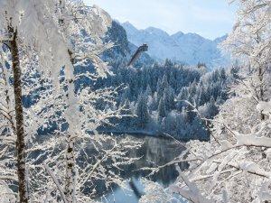 SFS Winter 2018 (3)