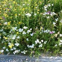 Blumenwiese am Barfußpfad