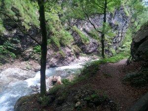 Tobelweg zur Traufbergalpe
