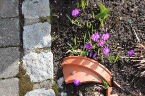 Frühlings-Boten!