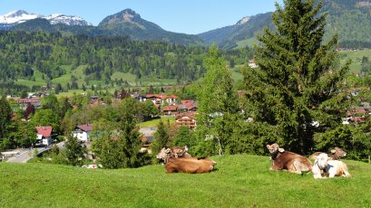 Oberstdorf und Kuh