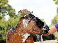 Petting-zoo-412250