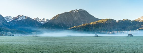 Morgens in den Wiesen