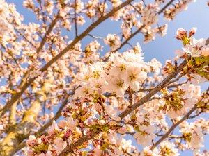 Frühlingsstimmung in Rubi