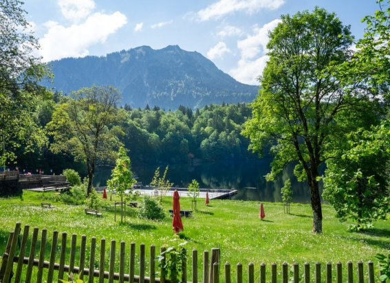 Sommer am Freibergsee