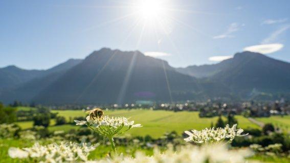 09.07.20 Jauchen-Karatsbichl-Oberstdorf-3000-002