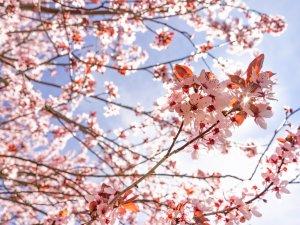 Gerstruben im Frühling