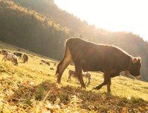 Herbstliches Trettachtal