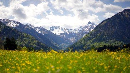 Frühlingswiese am Kühberg