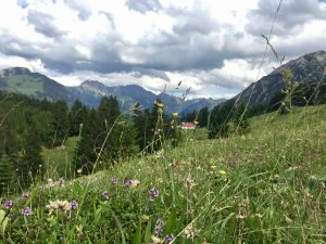 Blumenwiese-Hornbahn