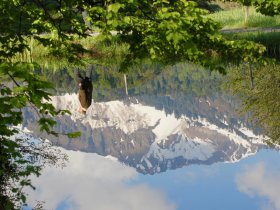 Moorweiher-Spiegelung
