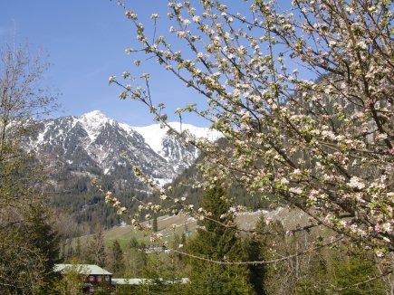 Frühling-Moorbad