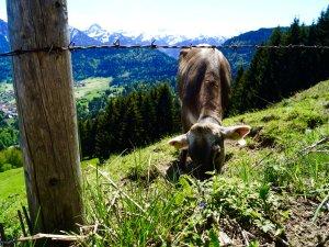 Allgäuer Bergwelt