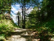 Tobelweg nach Obermaiselstein