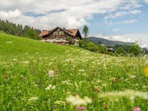 Sommer auf den Oberstdorfer Wiesen