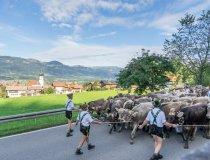 Viehscheid Schöllang und Rubi-005