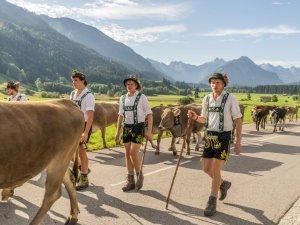 Viehscheid Schöllang und Rubi-040
