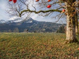 Herbstliche Stimmung am Moorweiher