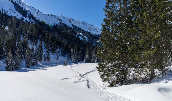 Winterwandern im Schwarzwassertal