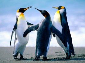 Pinguine sind herzlich willkommen
