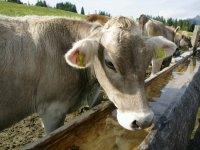 Untere Bichler Alpe Brunnen