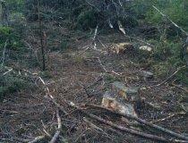 Wald 4