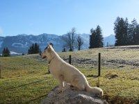 Ferienwohnung Mitu - Blick mit Hund