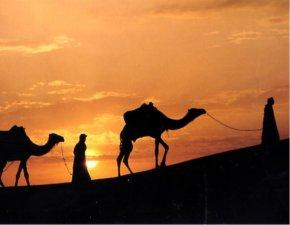 Arno Pürschel, Karawane in Saudi Arabien